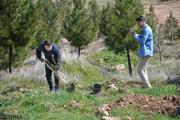 شهرداری ۵۶۰ اصله درخت در تهران میکارد