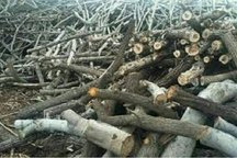 برداشت ۶ میلیون مترمکعب چوب طی ۶ دهه از جنگل های شمال