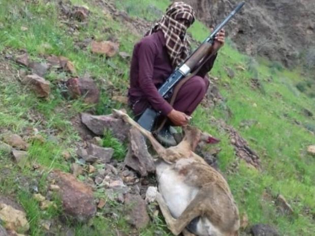 قاتل حیات وحش کرمان دستگیر شد