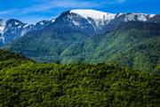 منابع طبیعی آستارا: حفظ جنگل در ارتفاعات نیازمند نیروی انسانی ثابت است
