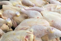روزانه 2 تن گوشت گرم مرغ در بجنورد توزیع می شود