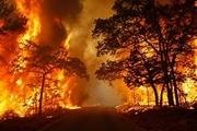 اطفای حریق جنگلها به عهده کیست؟
