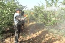 تاریخ مبارزه با کرم سیب در ارومیه اعلام شد