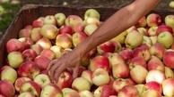 عوارض عجیب زیاده روی در مصرف سیب