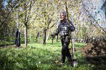 هزار میلیارد ریال کمک برای کشاورزان خراسان در نظر گرفته شده است