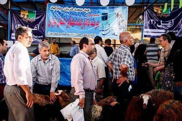 حدود ۵۰ هزار راس دام زنده عشایری در استان تهران عرضه شد