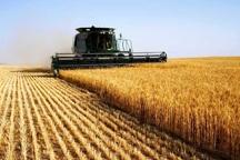 پروژه بین المللی افزایش عملکرد گندم در نمین اجرا شد