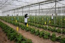 توسعه گلخانه ها از اهداف بخش کشاورزی آذربایجان شرقی است