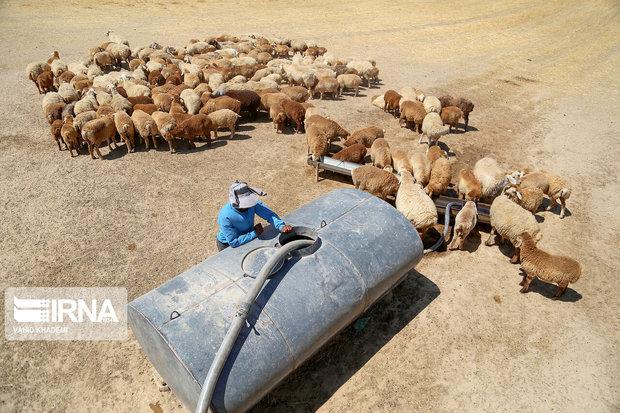 ۱۰ پروژه آبرسانی ثابت به عشایر استان کرمانشاه کلید خورد
