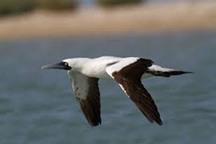 2 پرنده کمیاب نخستین بار درگناوه دیده شد