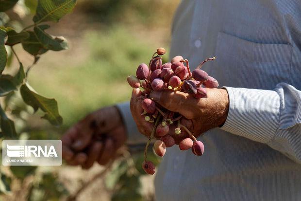 اقدامات تحولی دولت تدبیر در کشاورزی کرمان