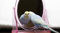 پرندگان دارای هوش و حتی خویشتن آگاهند!