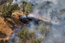 ۱۵ درصد آتشسوزی جنگلهای کشور عمدی است