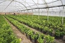 95 گلخانه در بوشهر بهره برداری شد