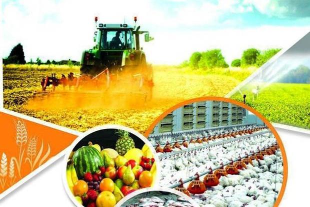 رشد 200 درصدی تولید، دستاورد چهل ساله انقلاب در کشاورزی قزوین