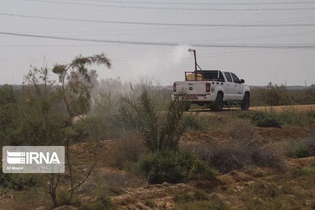 مبارزه با ملخ صحرایی در سیستان و بلوچستان از مرز۷۵۰۰ هکتار گذشت