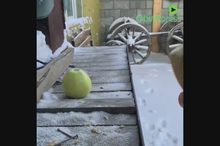 موز و سیب و زندگی در دمای منفی 53 درجه