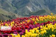 بازدید از باغ لاله کندر با ۱۲۰ هزار بازدیدکننده به اتمام رسید