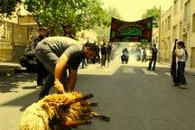 شهروندان قزوینی از ذبح دام در معابر عمومی پرهیز کنند