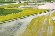 افزون بر ۹۲ درصد کشاورزان زیان دیده سیل گلستان کمک بلاعوض گرفتند