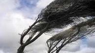 تندباد دامغان و شاهرود را درنوردید   درختان در امان نماندند