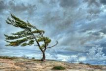 سرپرست هواشناسی: کاهش دما و وزش باد برای سمنان پیش بینی می شود