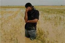 سیل به 9600 هکتار کشتزار و باغ خراسان شمالی آسیب رساند