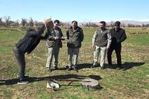 قزوین از استان های برتر در برخورد با شکارچیان متخلف است