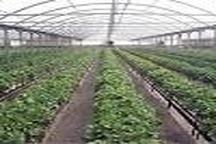 جهاد کشاورزی زنجان رتبه نخست کشوری در جذب اعتبارات مکانیزاسیون  جذب 158 درصدی اعتبارات تا به امروز