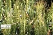 رشد ۱۵۰ درصدی بیمه محصولات کشاورزی و دامی سبزوار