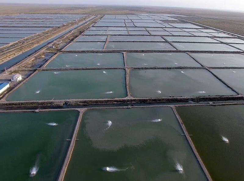 تولید آبزیان پرورشی در هرمزگان به ۳۴هزارتن افزایش می یابد