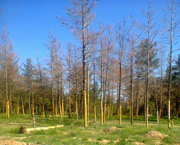 در صورت عدم رسیدگی به وضعیت پارک جنگلی تربت جام اعلام جرم میشود