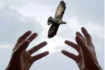 قاتل اندیمشکی از چوبه دار رهایی یافت