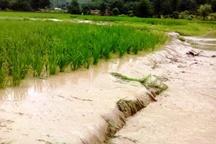 104 هکتار اراضی کشاورزی روستای سیروان زیرآب رفته است