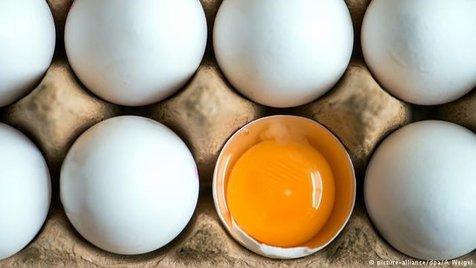 افزایش حمله قلبی با مصرف زیاد تخم مرغ