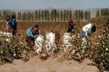 استفاده از کیسه های پلاستیکی صنعت پنبه خراسان شمالی را تهدید می کند