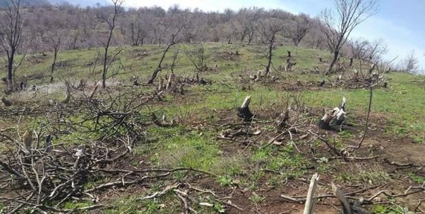 خسارت آفات چوبخوار به 70 درصد درختان خراسان جنوبی