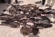 نوع سم موثر در مرگ عقاب های سروستان هنوز مشخص نیست
