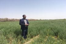 افزون بر 14هزار هکتار زمین های یزد محصول زراعی کشت شد