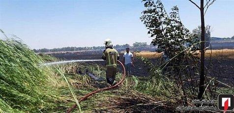 در پی آتشسوزی در گندمزار خودروی پژوپارس آتش گرفت+ تصاویر