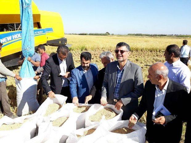 صادرات شلتوک برنج در محاصره اما و اگرهای مسوولان خوزستانی