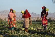 292 میلیارد ریال به طرح های اشتغال حاجی آباد اختصاص یافت