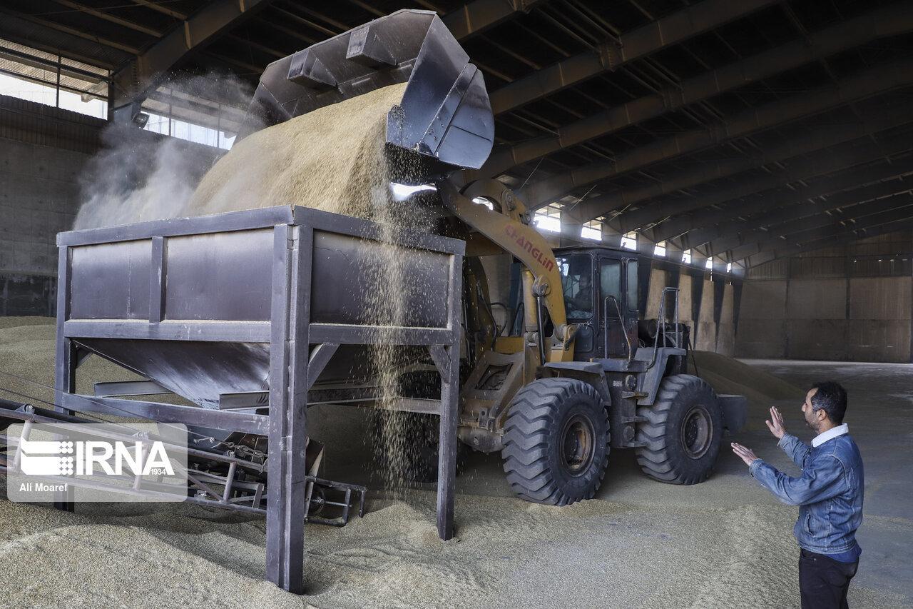 معاون استاندار ایلام: رعایت دستورالعمل ستاد کرونا در مراکز خرید گندم ضروری است
