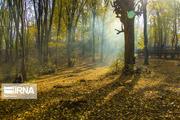 ورود افراد به پارکهای جنگلی همدان ممنوع شد