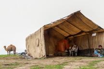 40 هزار راس دام به مراتع امن گلستان منتقل شد