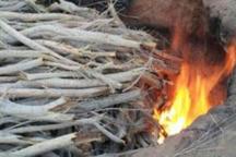 تولید کننده ذغال غیر مجاز در زاهدان دستگیر شد
