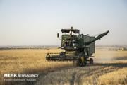 برداشت گندم از سطح ۴۰ هزار هکتار مزارع دزفول آغاز شد