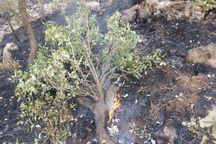 مهار آتشسوزی در عرصههای طبیعی خراسان شمالی