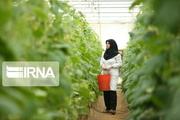 ۲۹ پروانه بهره برداری گلخانه در فارس صادر شد