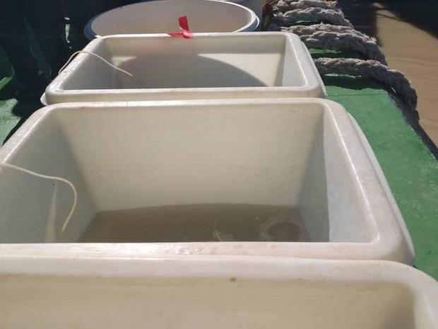 24هزار قطعه بچه ماهی در رودخانه بهمنشیر آبادان رهاسازی شد